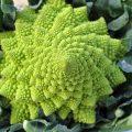 Broccolo Romanesco - Proprietà e Benefici